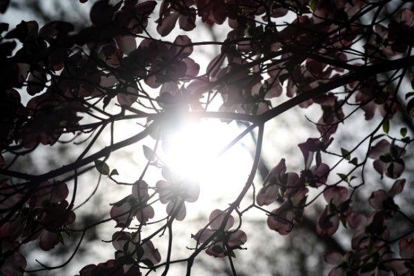 Flowers in the Sun.jpg