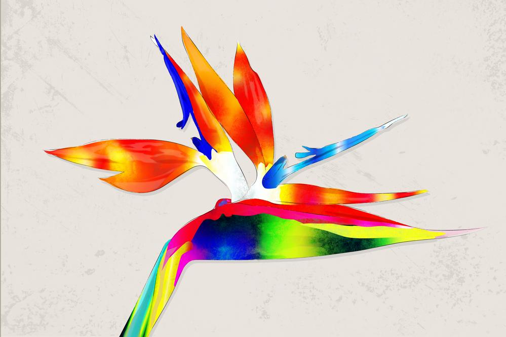 Bird_of_Paradise.png