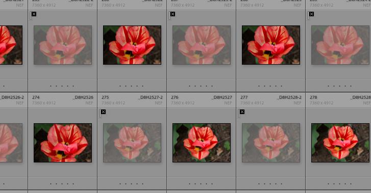 Screen Shot 2020-04-30 at 12.20.43 PM.png