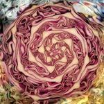 nervesalad