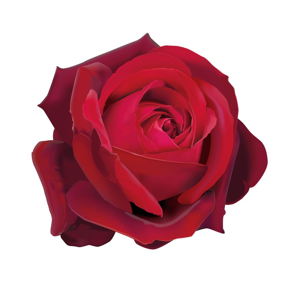 ROSE Edith Piaf 50%.png