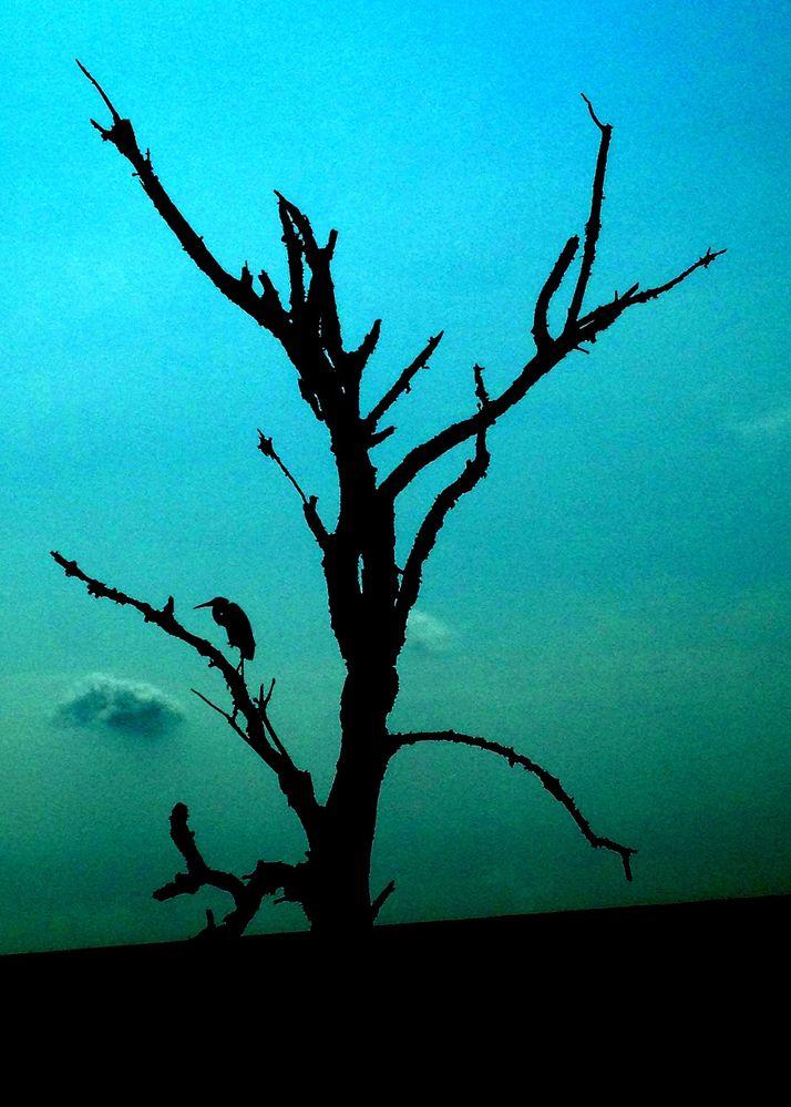 Bombay Hook Silhouette.jpg